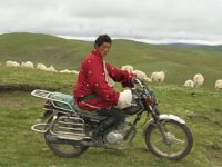 Tibetan grasslands have been a lifeline for pastoralists for thousands of years.