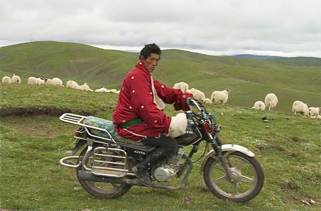 Herding on motobike