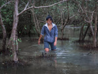 Wudan Yan wading through what remains of a mangrove forest in Myanmar's Ayeyarwady Delta in Oct 2015.